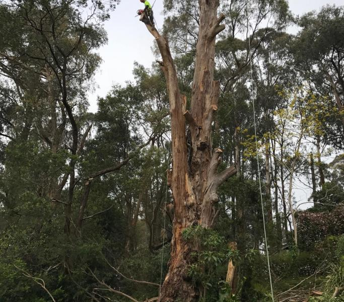 service image rigoni trees