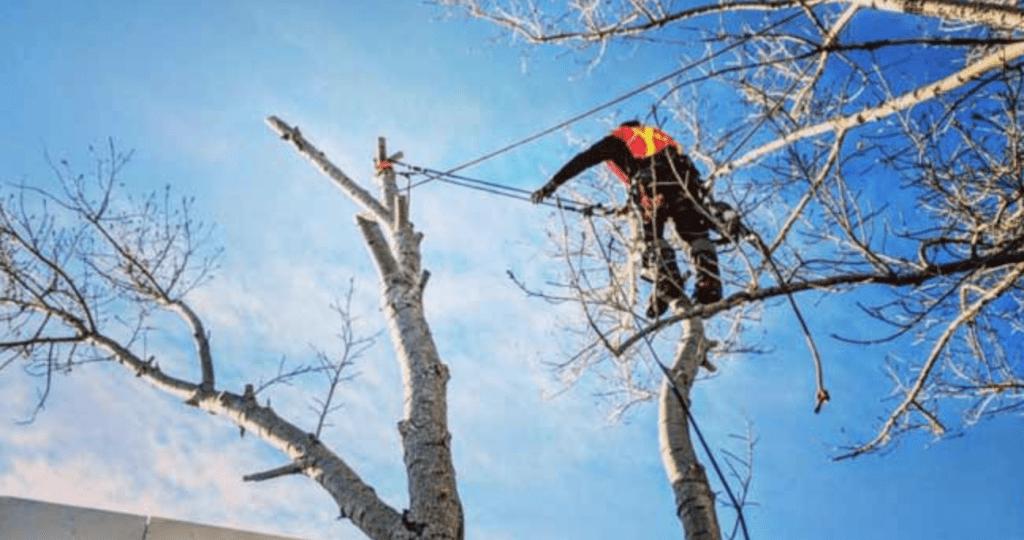 arborist melbourne